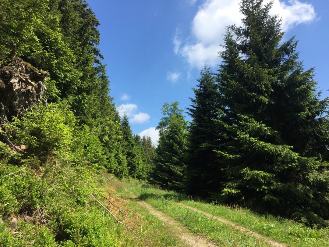 Bodensee und Schwarzwald 2015