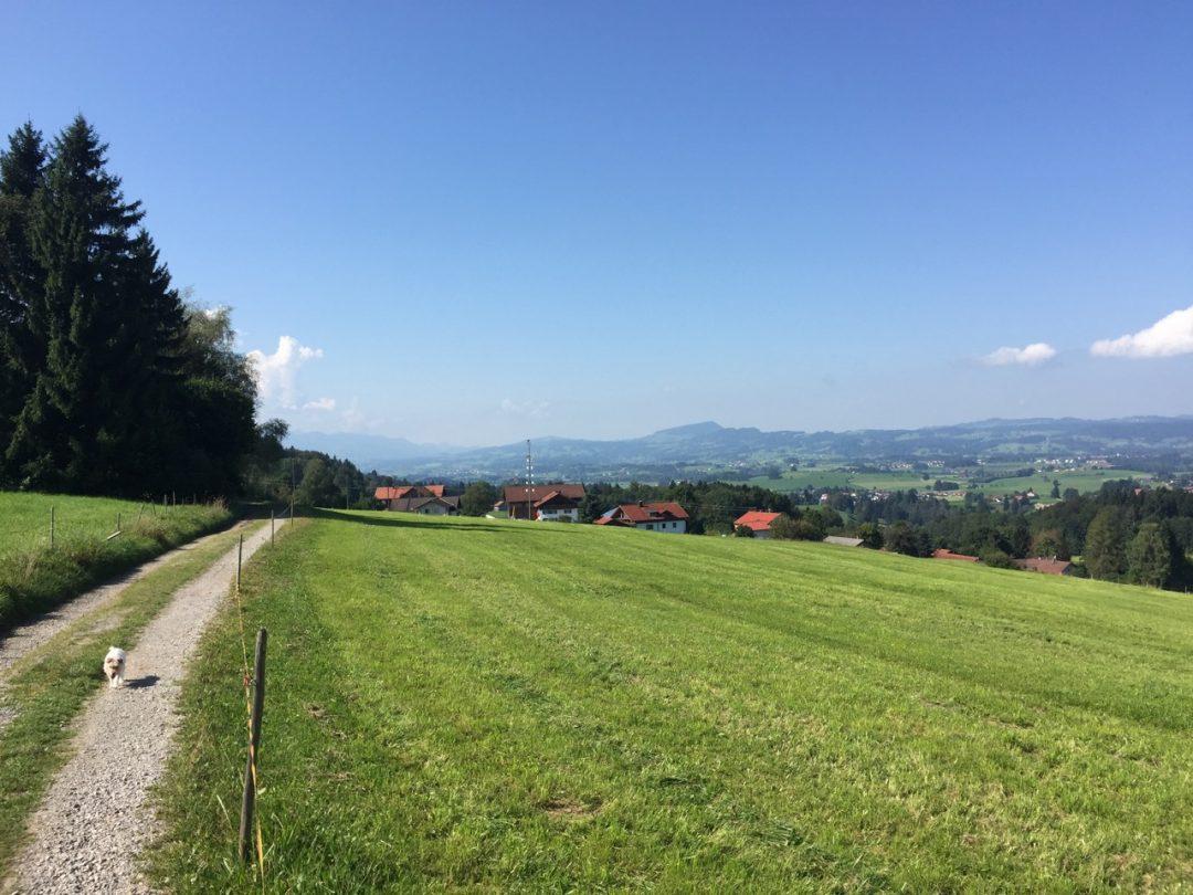 Sulzberg 2016