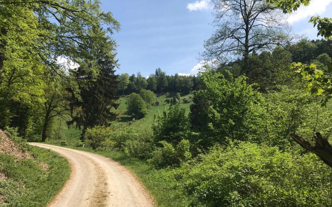 Harz (Zorge) 2018
